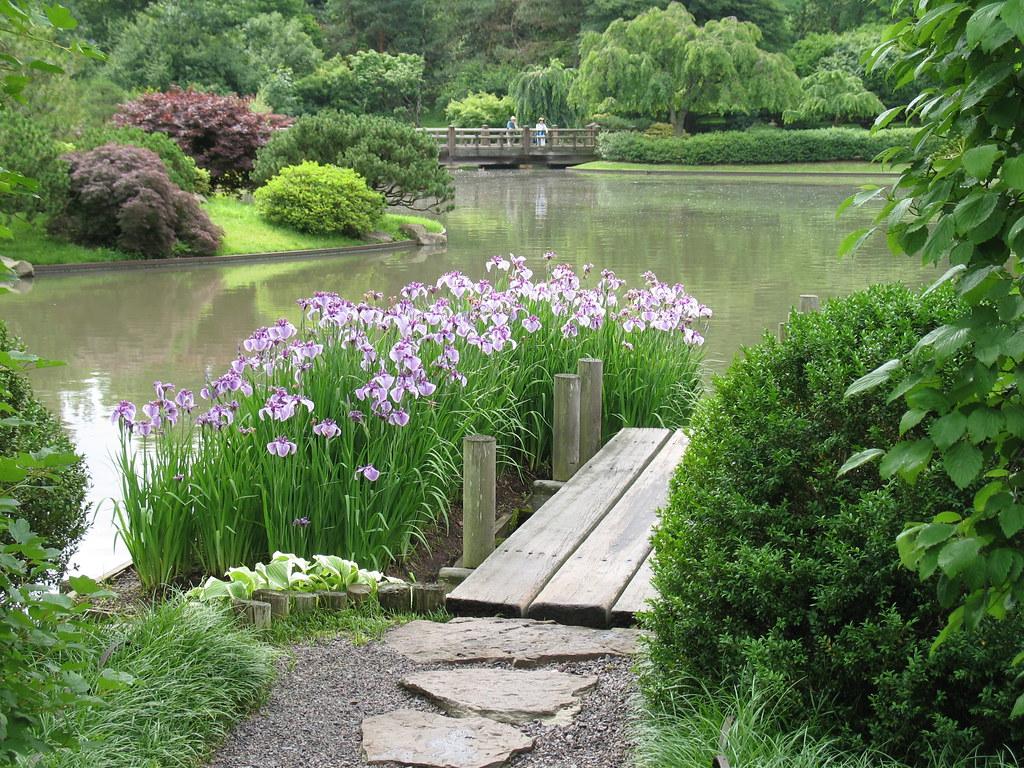 Japanese Iris Japanese Iris Iris Ensata Japanese Garden