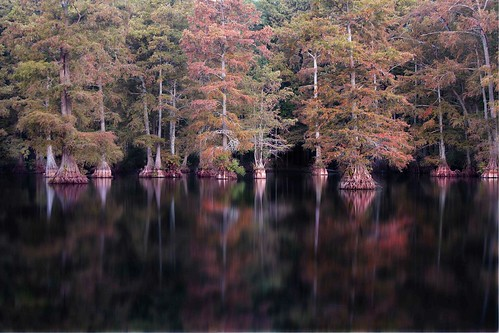 Water Trees | by Anne Strickland