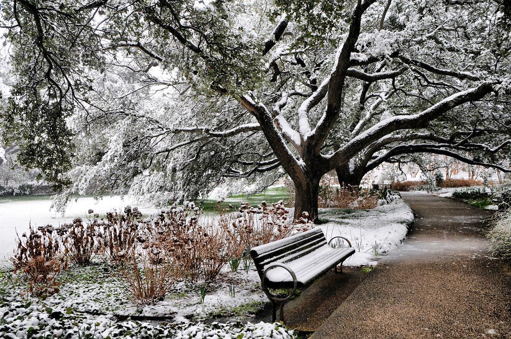 Snow Botanic Garden Fort Worth Texas Snowfall Winter Storm