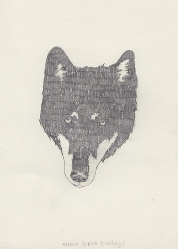 Wolf | by Peter Carrington