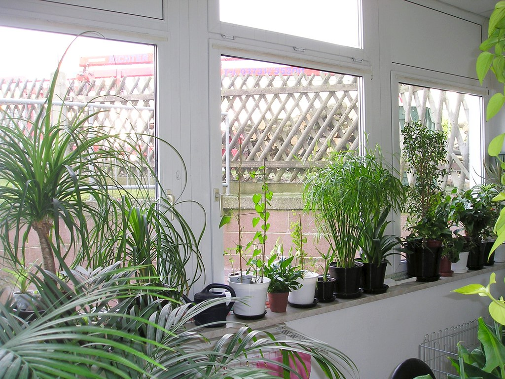 pflanzen im wintergarten april 2008 creative commons. Black Bedroom Furniture Sets. Home Design Ideas