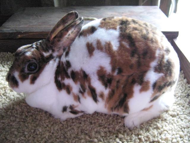 Best Rabbit Vibrators  The Rabbit Company