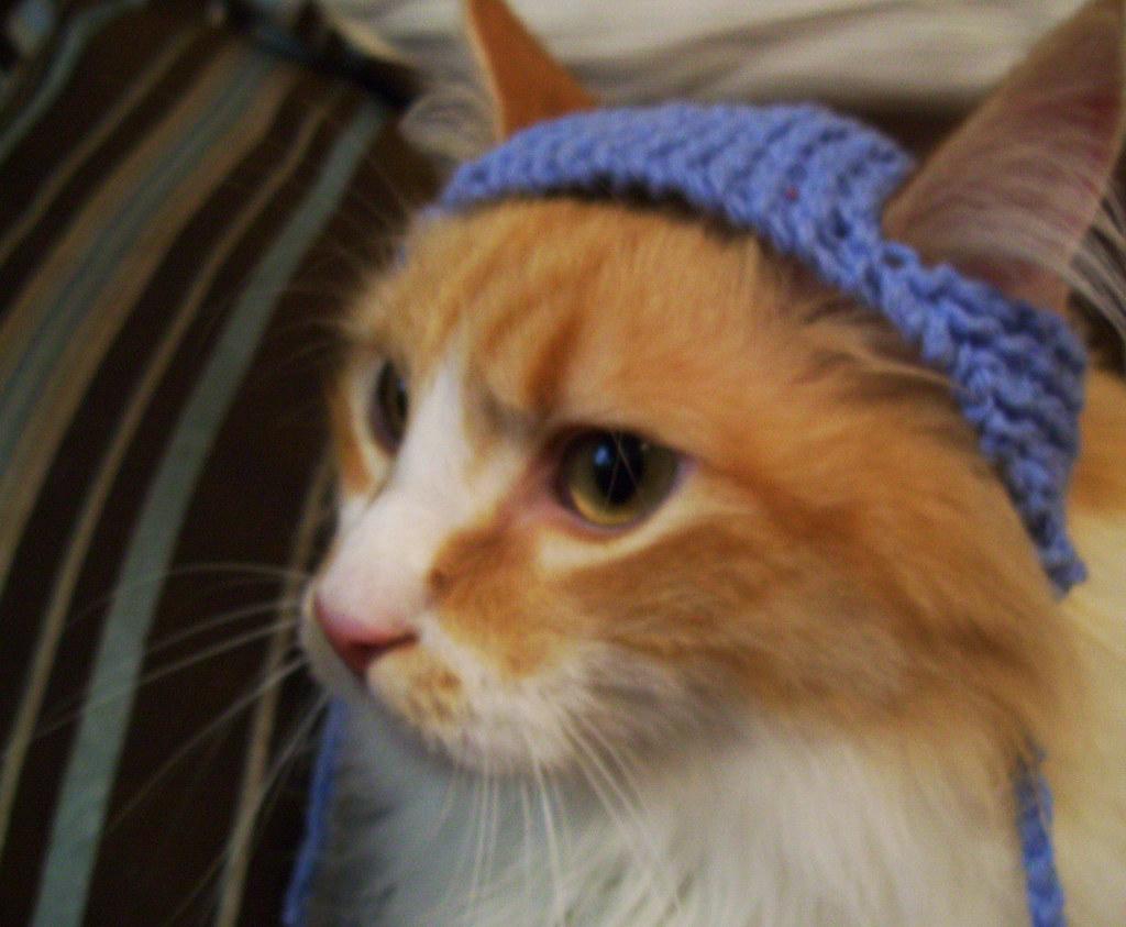 Free Patytern To Make A Turkey Cat Hat