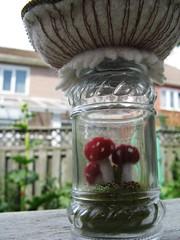 A chunky mushroom terrarium