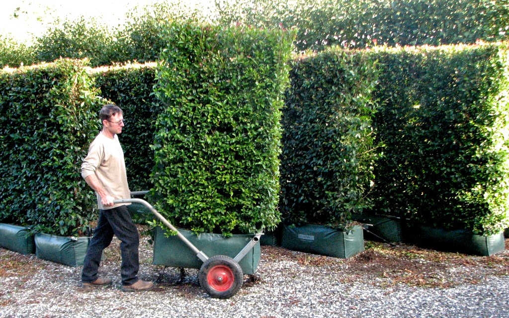 Wheels Make Moving The Living Screen Light Work Hedge