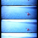 Flyin' Hawaiian SuperSampler