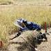 Clearing a minefield in Sri Lanka