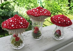 A few more mushroom terrariums