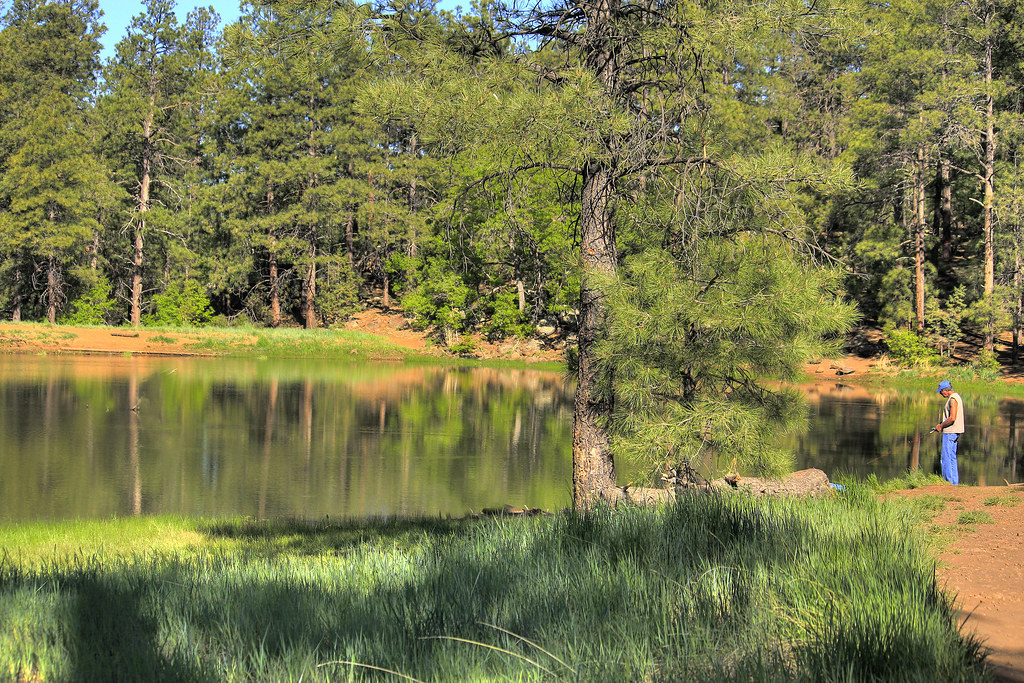 Fishing on mingus lake most mornings you can find for White mountain fishing report