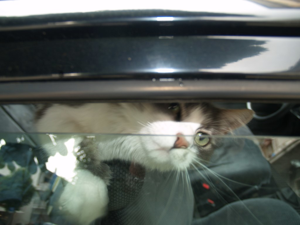 cat in car cat in car flickr. Black Bedroom Furniture Sets. Home Design Ideas