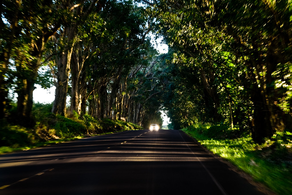 things to do in Kauai - EUCALYPTUS TUNNEL