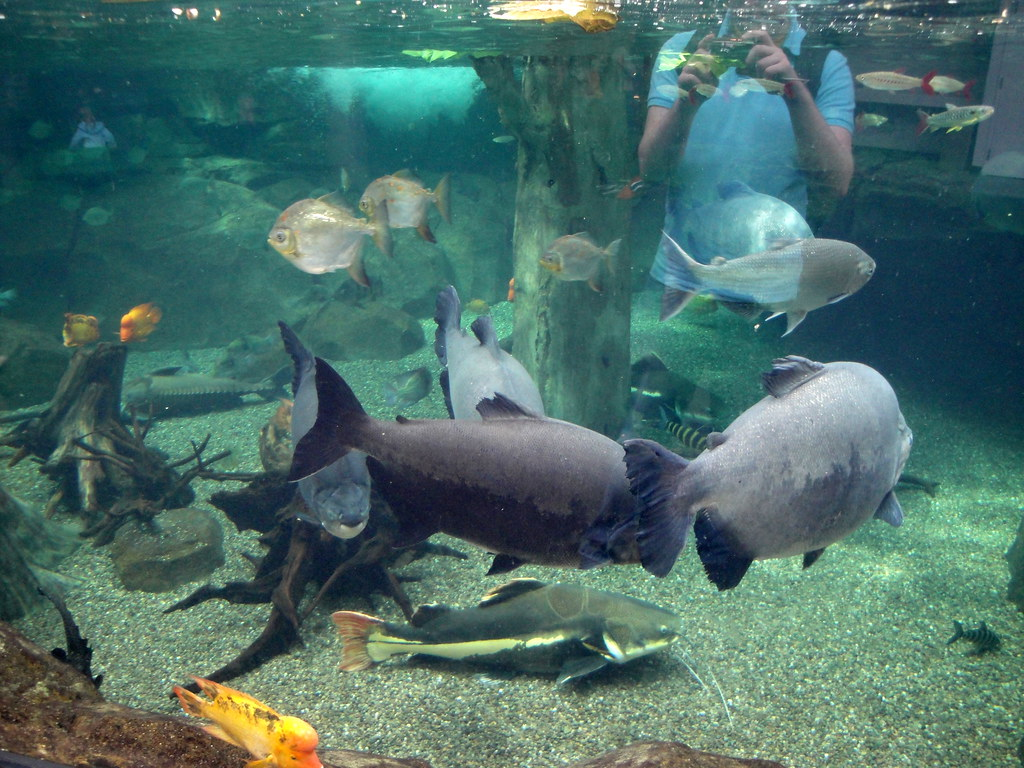 pittsburgh zoo aquarium amazon river tank