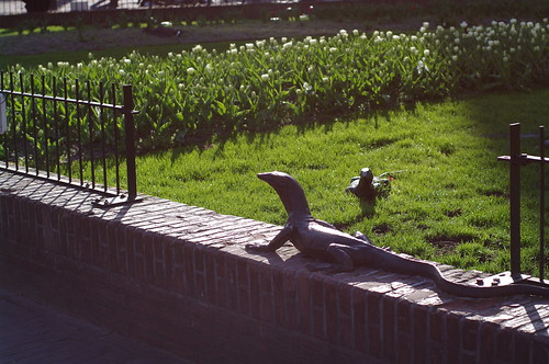 lizards on Leidseplein | by milov
