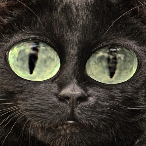 Cats Eyes | by @Doug88888