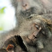 Bali - Monkey Forest - My beloved