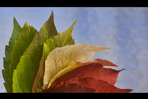 The colors of Autumn. | by Palentino