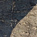 Partially shaded river rock with coarse texture