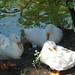 2008-06-22 - Ciutadella - 08