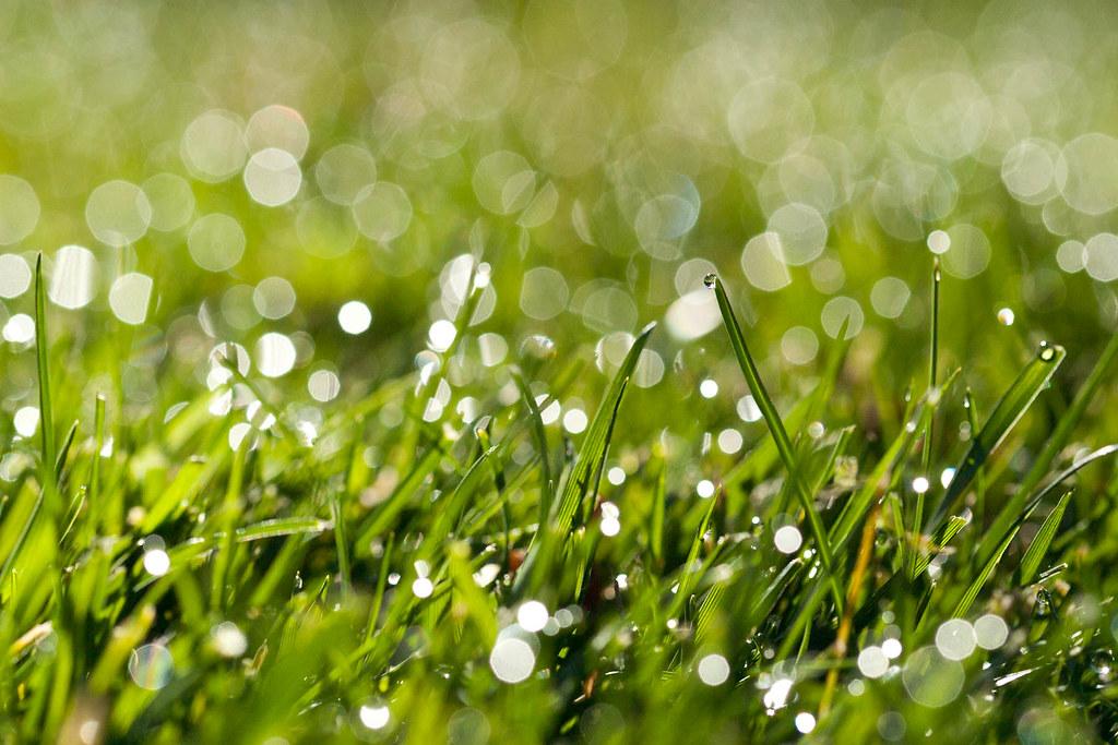 Dewy grass | 96/365. | Anne Sandman | Flickr
