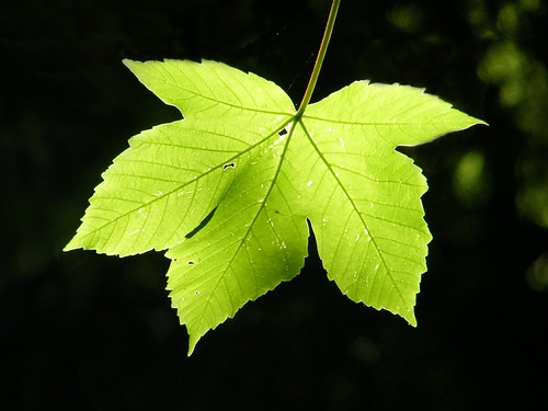 Leaf | by Mark C (Downloadable)