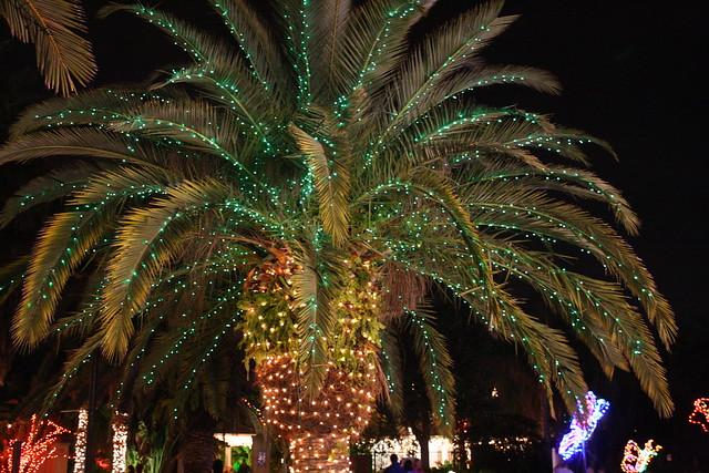 Photo - Florida botanical gardens christmas lights ...