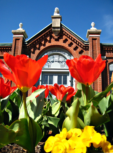 Tulips in front of the Linnean House | by Missouri Botanical Garden