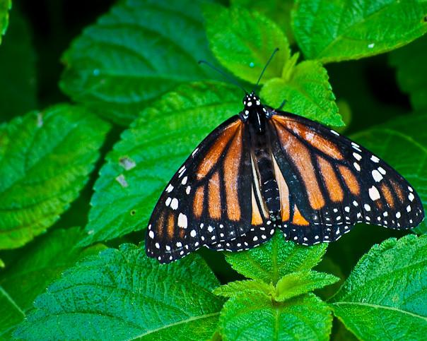 Corpus Christi Botanical Gardens Photos Taken At Corpus Ch Flickr