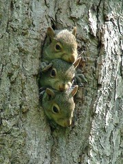 3 Baby Squirrels - Kennerdell | by visitPA
