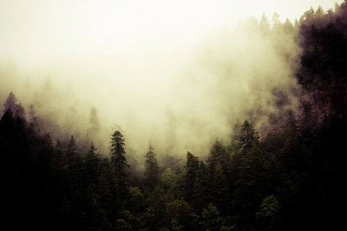 Fog in June? | by The Sometimes Crafter