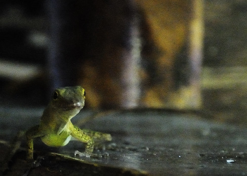 Lizard, in green | by maggie-a-day