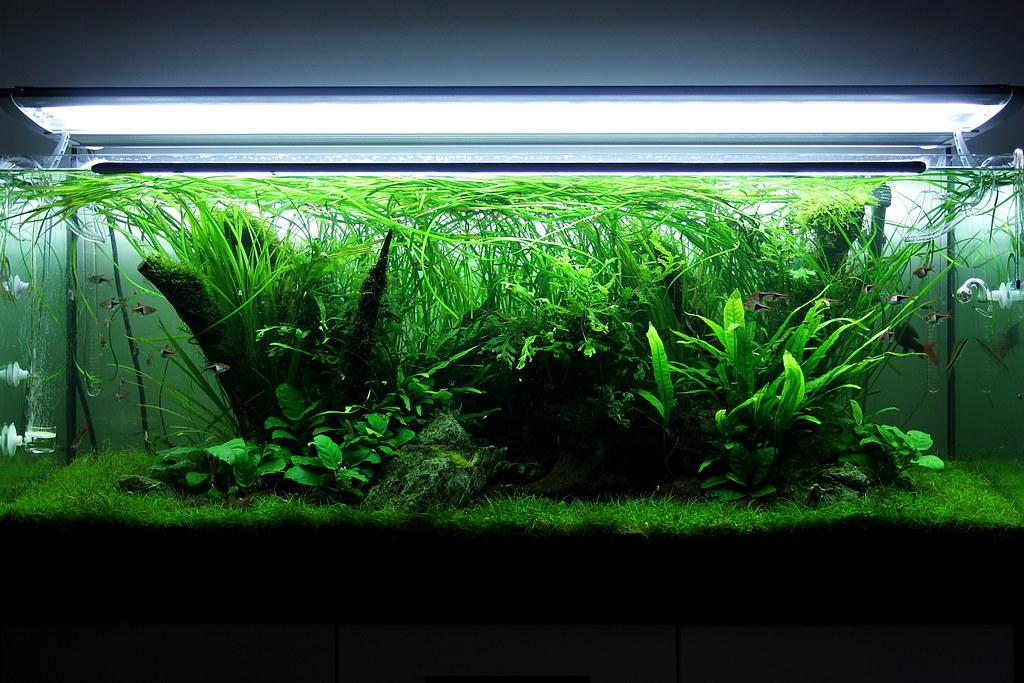 My 240l nature aquarium one of my latest aquascape i for Sable pour aquarium