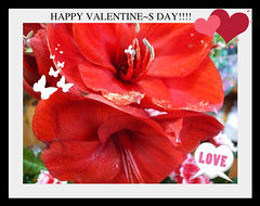 HAPPY VALENTINE<S DAY!!!!_FOR YOU!!!!! | by viorela5