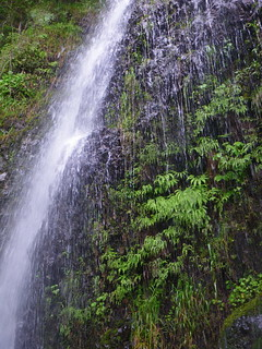 waterfall and ferns | by red alder ranch