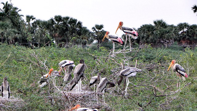 Koonthankulam Bird Sanctuary