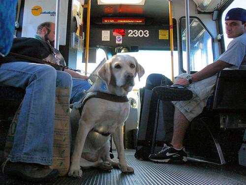 Seeing Eye Dog Training Bradenton Fl