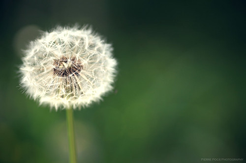 macro#03 | by Pierre Pocs
