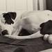 Ida T. Dog sleeping with her toy