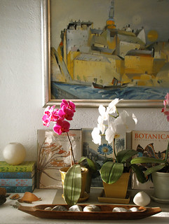 The orchids are thriving | by Geninne