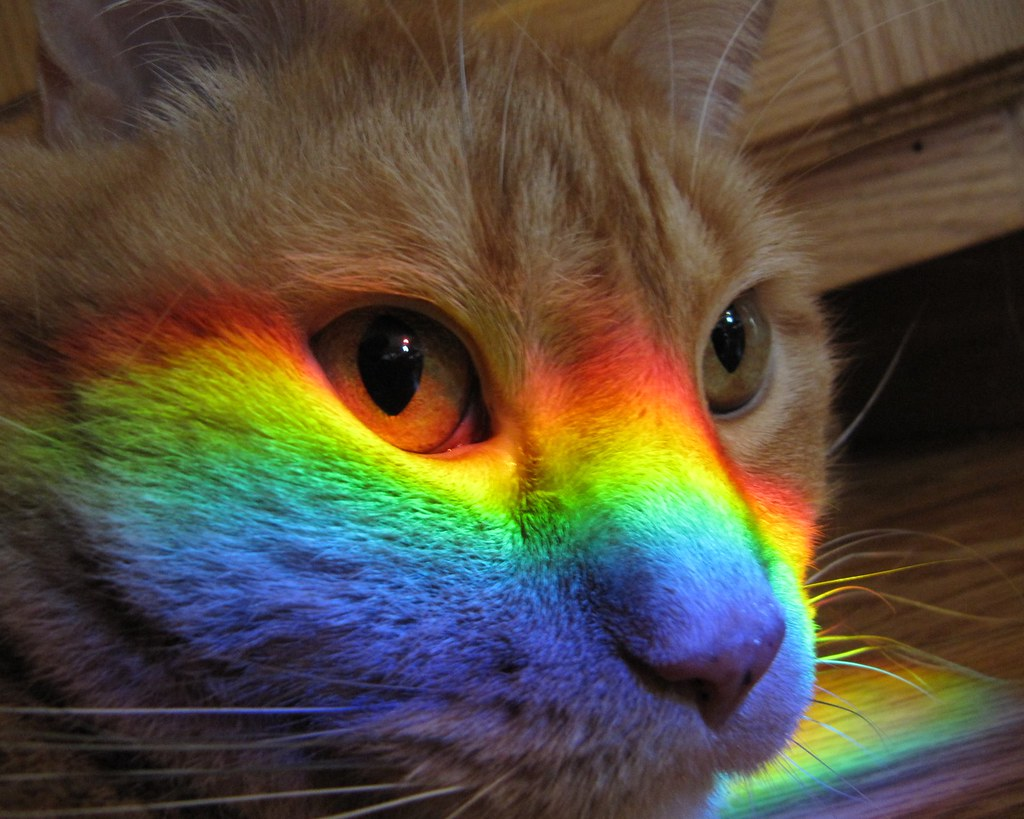 Rainbow Cat This Photo Is Not Photoshopped The
