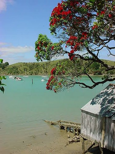 Pohutukawa and Boatshed | by Tonyfoster