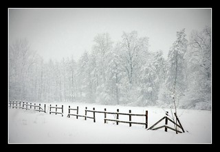 Fence, trees and snow | by Gilmoth