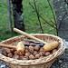walnutsnoix