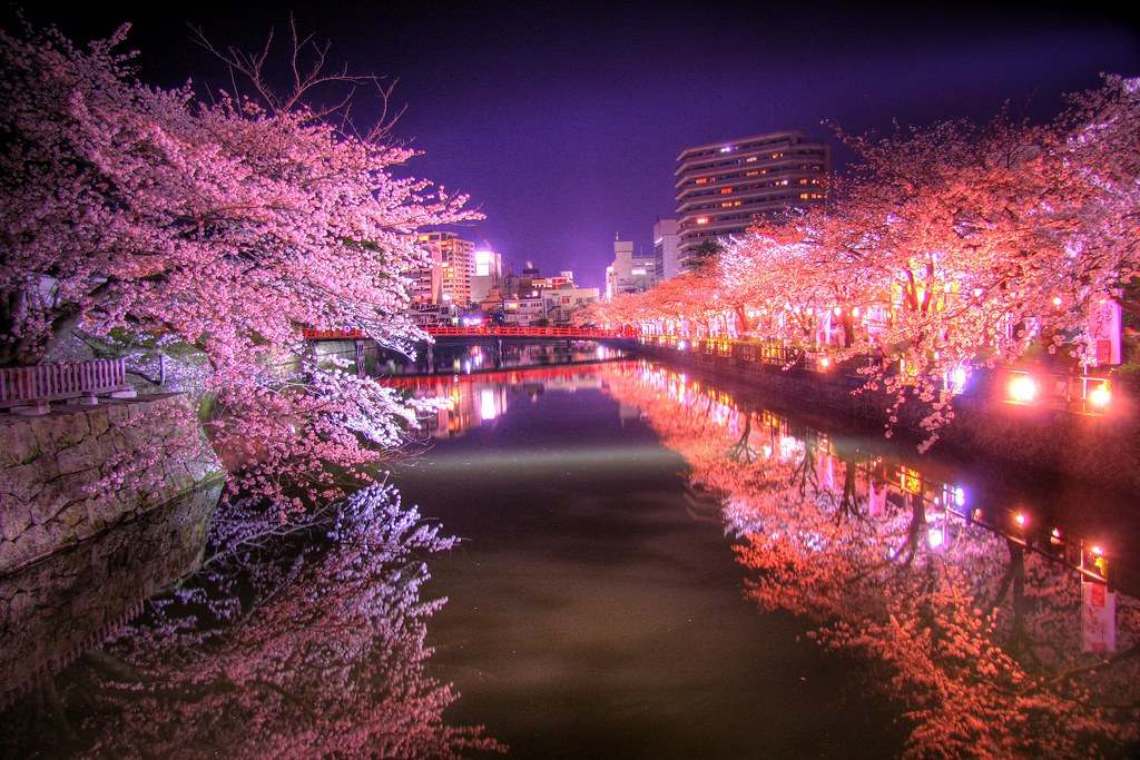 Night Sakura Odawara San Nomaru Shinnygogo Flickr