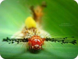 """The caterpillar does all the work but the butterfly gets all the publicity"" 
