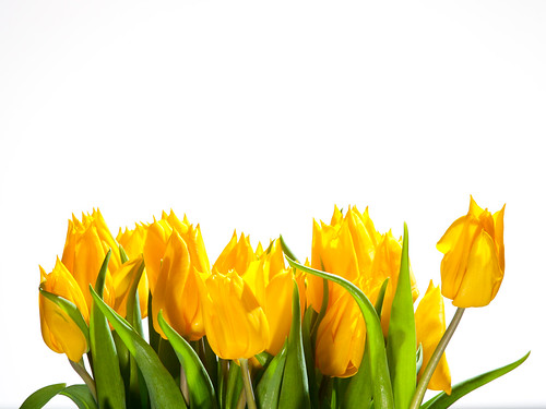 May Flowers Background