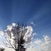 sky rays (3)