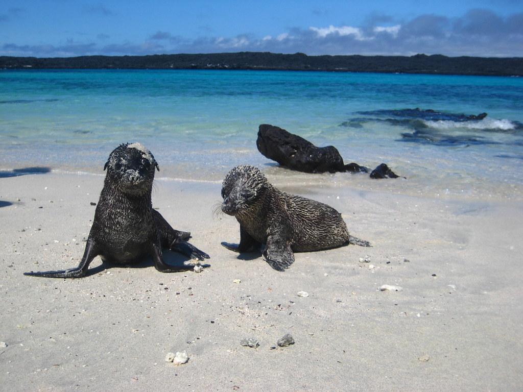 Galapagos ostrov kitaiskaia shliapa