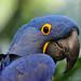 Birds -- SD Zoo Part 4