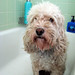 1-14-10 Bath Time