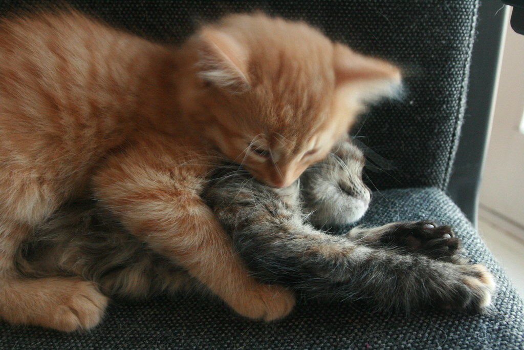 Cat Cuddles With Dog Warmth